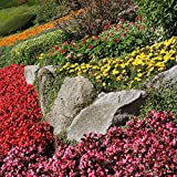 Annual Rockery Plant Mix Seeds -