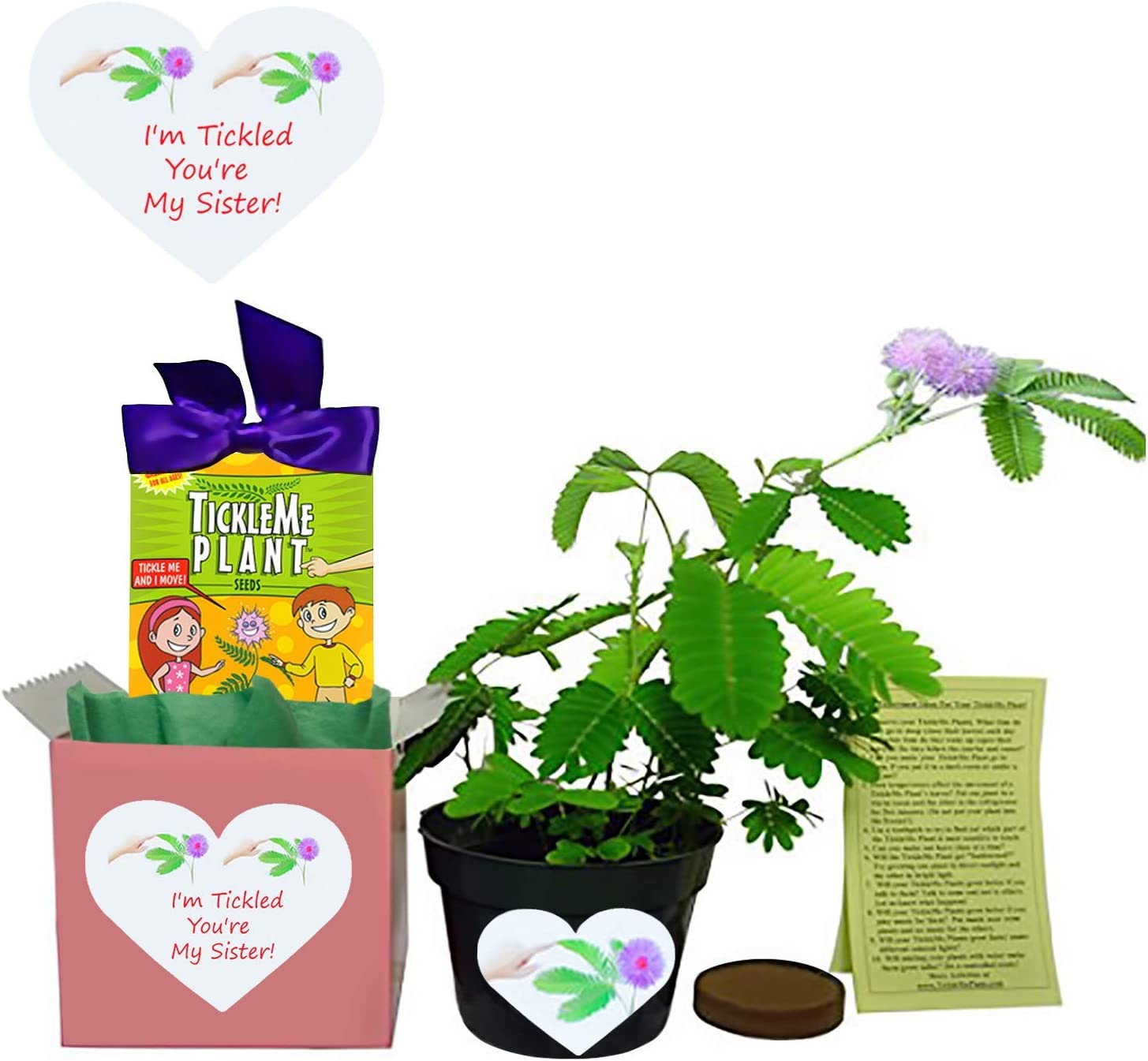 Sister - TickleMe Plant Gift San Jose Mall Regular dealer Box Cl The Grow to That Set