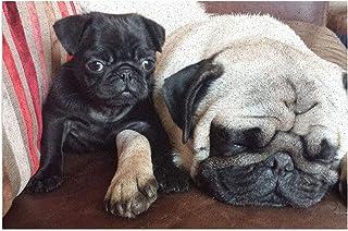 Tapis de Toilette 丨 I Love Pug Dog Paillasson en PVC antidérapant Tapis extérieur Paillasson Bienvenue Paillasson, Convien...