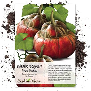 Package of 30 Seeds, Turks Turban Winter Squash (Cucurbita maxima) Non-GMO Seeds by Seed Needs