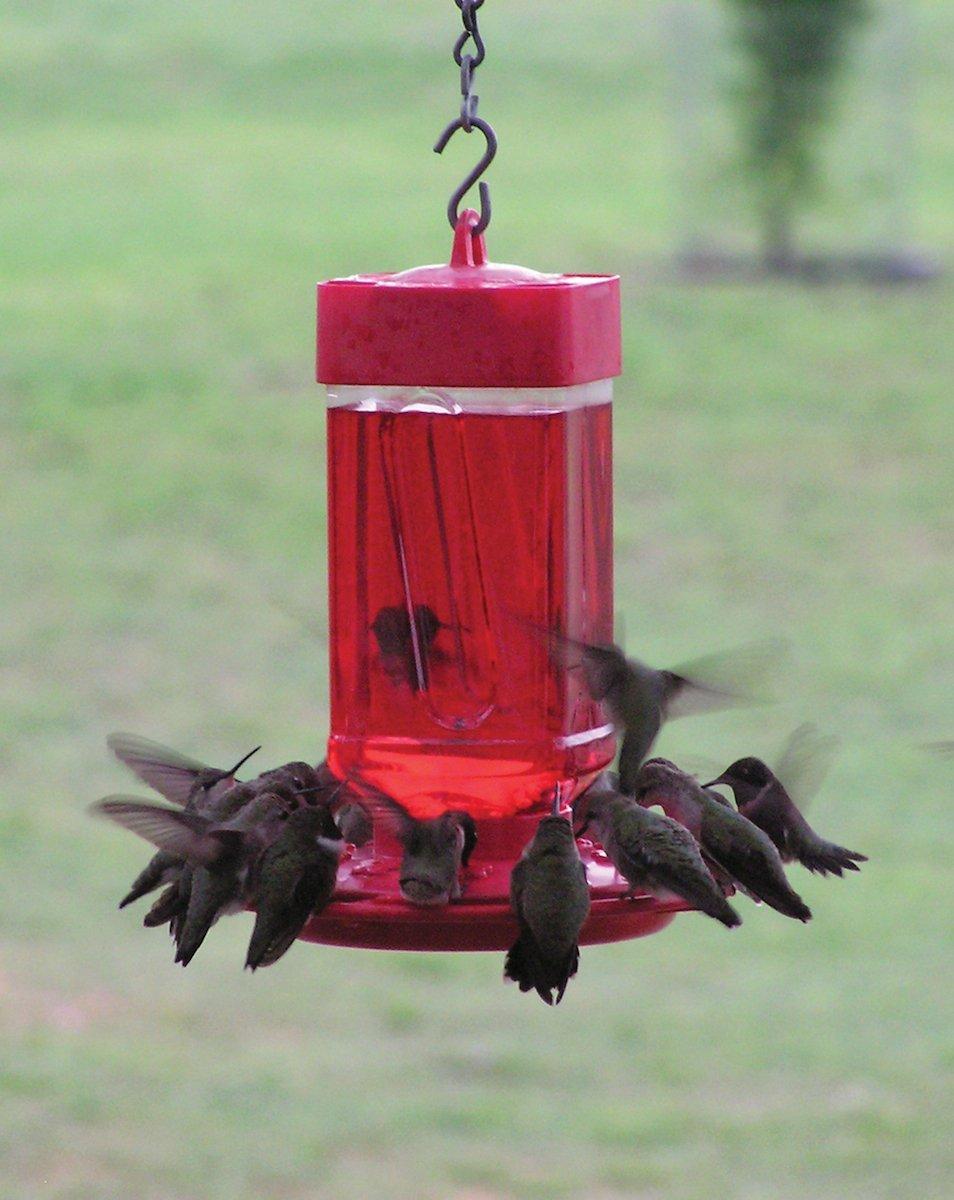 First Nature 3055 32-ounce Hummingbird Feeder
