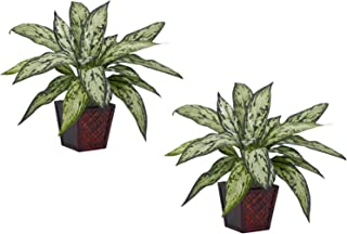Nearly Natural 6694-S2 Silver Queen Decorative Silk Plant, Green, Set of 2