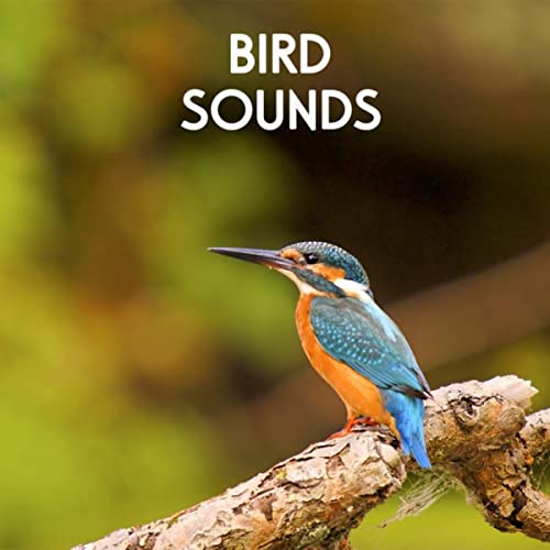 Bird Sounds - Morning Birds for Relaxation, Meditation, Yoga , Naturescapes, Forest Ambience and Spa