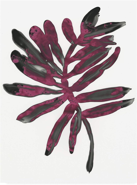 Trademark Fine Art Foliage Fossil III by June Erica Vess, 14x19