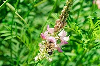 Intermountain West Honey Bee Pasture Blend (1 Acre)