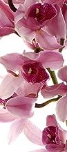 AG DESIGN Photographic Print Decorative Wall Sticker, Orchid, Multi-Coloured Bunt