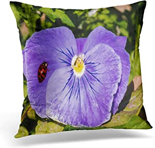 Emvency Throw Pillow Cover Black Shell Harlequin Ladybird Lady Bug Resting on Purple Decorative Pillow Case Home Decor Square 18 x 18 Pillowcase