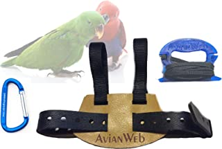 eclectus parrot harness