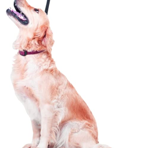 Dog Obedience Whistle   Training Whistle for dogs