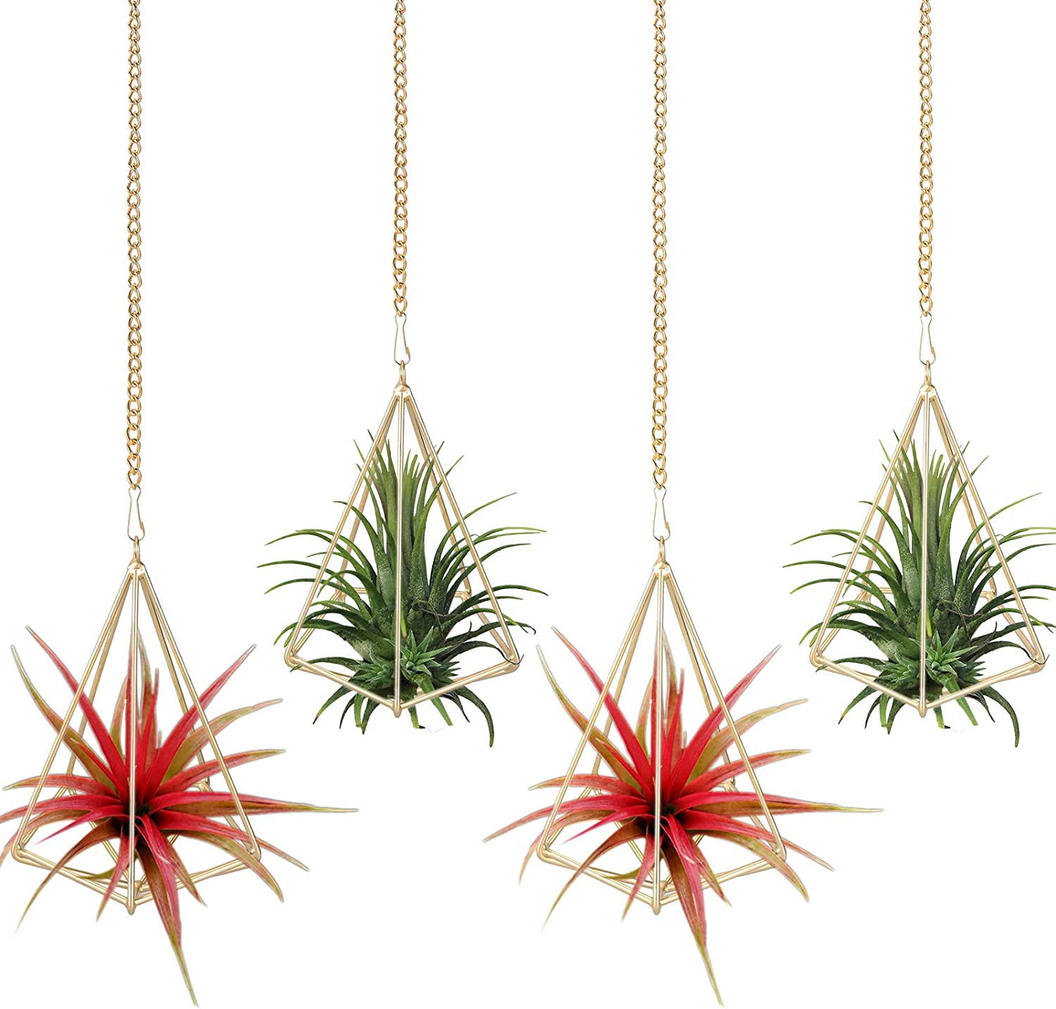 LYOOMALL Air Plants Over item handling Holders Hanging Plant Ranking TOP14 Hanger Metal Geome