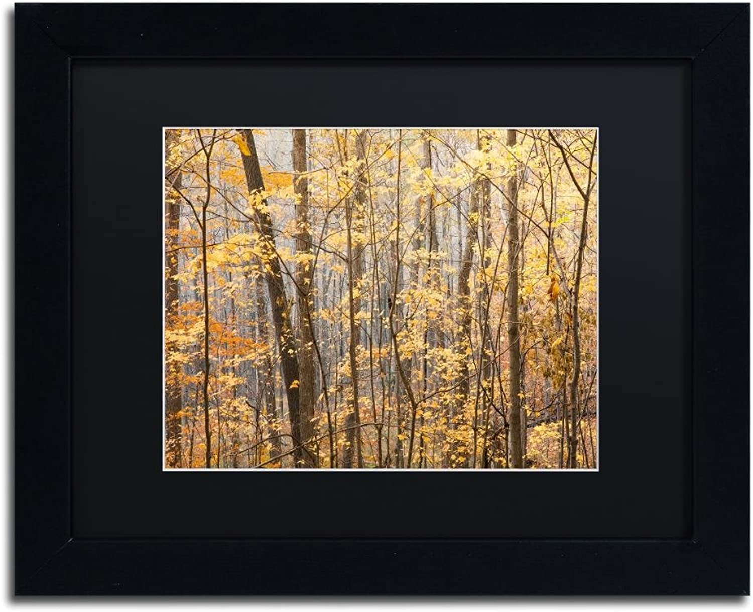 Trademark Fine Art Autumn Tree Line 2 by Jason Shaffer, Black Matte, Black Frame, 11  X 14