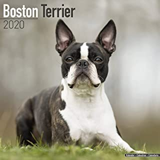 Boston Terrier Calendar 2020 - Dog Breed Calendar - Wall Calendar 2019-2020