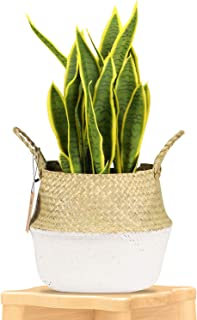 LEEPES Seagrass Plant Basket Indoor Woven Planter Holder with Macrame Wrap Pot Cover Storage Organizer with Handles for Home Decor(8.5