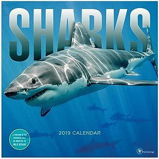 2019 Sharks Wall Calendar
