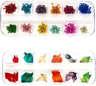 LONG TAO 2 Boxes (48 Pieces) Mini Natural Dried Flowers and Leaves Dried ammi majus Flower for Resin Jewelry Pendant Bracelet Scrapbooking Arts & Crafts DIY Cards Making