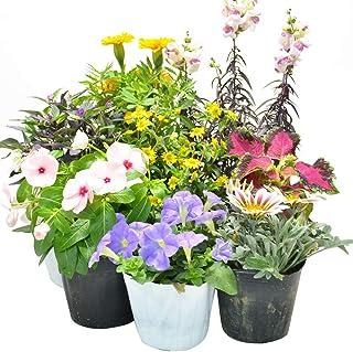 店長おまかせ 季節の花苗8個セット ガーデニング 園芸 寄せ植え 花 苗