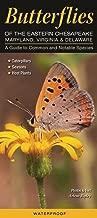 common virginia butterflies