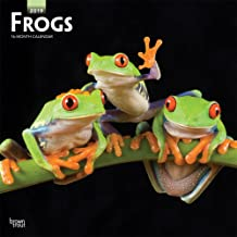 Frogs 2019 12 x 12 Inch Monthly Square Wall Calendar, Wildlife Animals (Multilingual Edition)