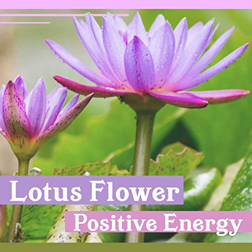Lotus Flower Positive Energy Music For Zen Relaxation Nature