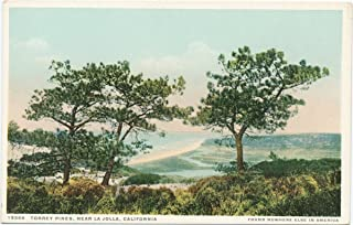 Historic Pictoric Postcard Print - Torrey Pines, near La Jolla, Calif, 1898 - Vintage Fine Art