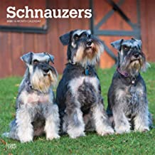 Schnauzers International Edition 2020 12 x 12 Inch Monthly Square Wall Calendar, Animals Dog Breeds