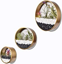 Round Indoor Wall Succulent Hanging Planter, Metal Decorative Freestanding Mount Holder with Glass for Air Plants, Faux Flower,Set of 3 … (Gold)