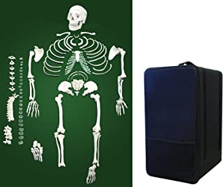 Vision Scientific VAS220-CC0 Life Size, Total Disarticulated Skeleton | Bones & Osteological Features Numbered for Identification | 3-Part Skull | Key to Numbered Structures W Manual & Carrying Case