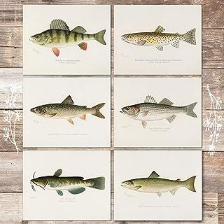 Fish Wall Art Prints (Set of 6) - Unframed - 8x10s | Vintage Fishing Decor