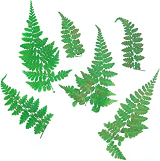 Monrocco Pack of 12Pcs Natural Pressed Ferns Leaves Pressed Real Dry Leaves for DIY Scrapbooking Arts Crafts,Card Making