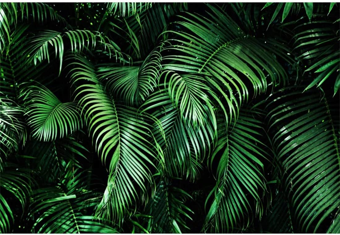 Nature 8x10 FT Backdrop Photographers,Tropical Plants with Large Evergreen Leaf Lemon Botany Palm Jungle Graphic Background for Child Baby Shower Photo Vinyl Studio Prop Photobooth Photoshoot