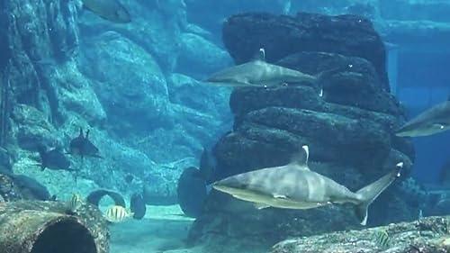 『Peaceful Aquarium HD』の8枚目の画像