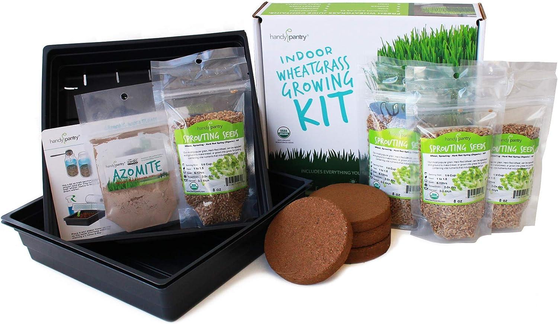 Financial sales sale Organic Wheatgrass Growing Starter Kit Wheat Grow Excellence Juice Gras -