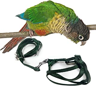 Leoie Adjustable Pet Parrot Leash Bird Harness Traction Strap Outdoor Rope for Cockatiel Random Colour Small