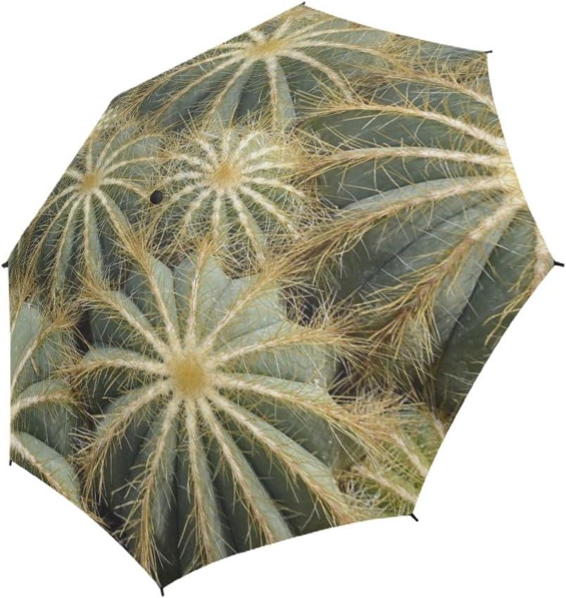 ENEVOTX Cactus Parodia Magnifica Tropical Semiau Unique Fixed price for Popular products sale Umbrella