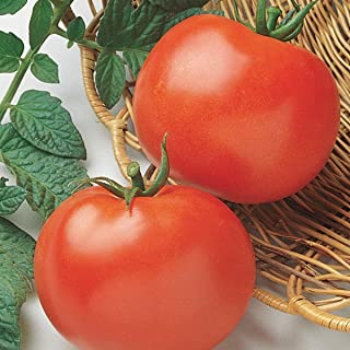 Best rutgers vf tomato Reviews