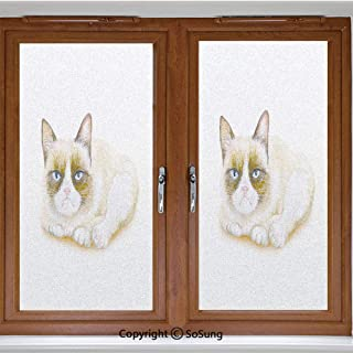 24x24 inch Decorative Window Privacy Film,Grumpy Siamese Cat Angry Paws Asian Kitten Moody Feline Fluffy Love Art Print Frosted Stained Window Clings Static Cling for Home Bedroom Office