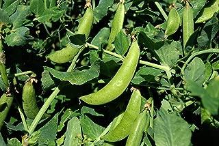 GEOPONICS ugar semences pois 100pc