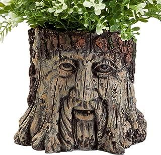 Best plants for garden urns Reviews