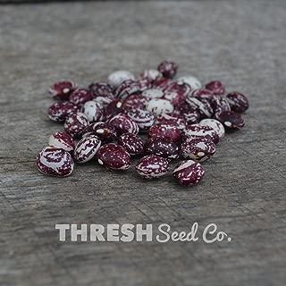 Good Mother Stallard Bean - 25 Seeds