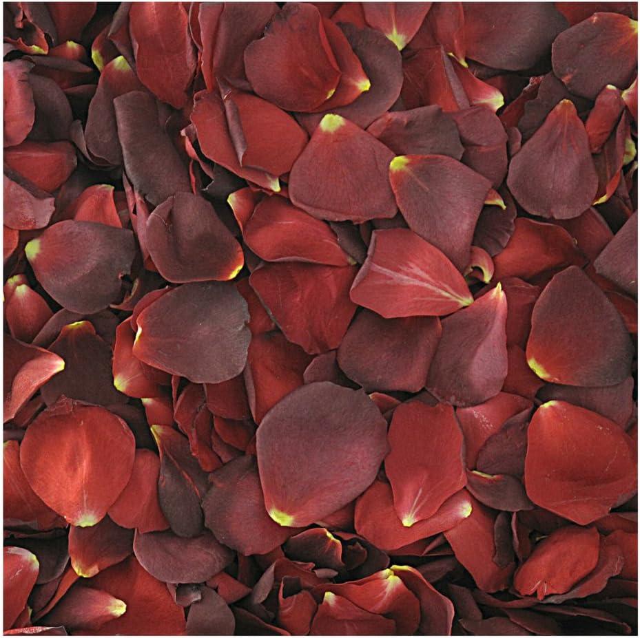 Hot Cocoa Rose Petals - 120 Cups Rose Petals. Wedding Petals fro