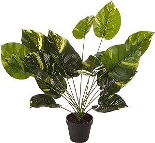 Cooper & Co. Homewares Botanica Artificial Dieffenbachia Plant, 45 cm, Green (SJ826)