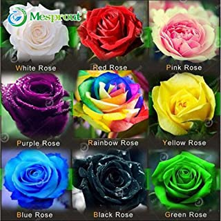 100 Seeds Rare Holland Rainbow Rose Flower Seed To Your Lover Gorgeous DIY Home Garden Flower Seeds New Arrival !(Mix Color)