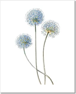 Botanical Prints Wall Art - Vintage Blue Globe Onion Flower Print - 11x14 – Unframed