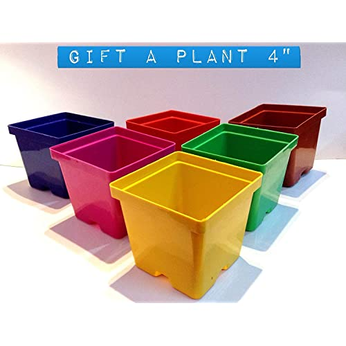 GARDENS NEED 110022 Plastic Gift Pot Set (Multicolored, 8-Pieces)