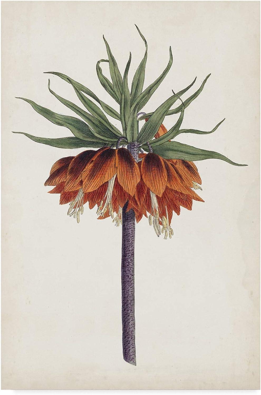 Trademark Fine Art Garden Beauties II by Curtis, 12x19