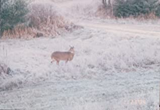 Around Here Deer