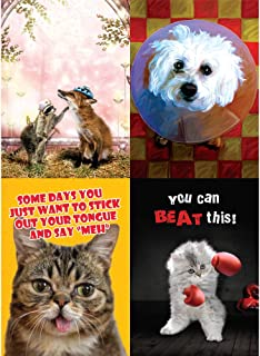Tree-Free Greetings Funny Animal Get Well Card Assortment, 5 x 7 Inches, 8 Cards and Envelopes per Set (GA31532)