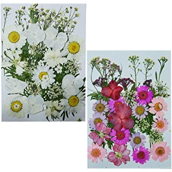 Uokwiwi Real Dried Pressed Flowers Assorted Colorful Daisies Leaves Hydrangeas for Art Craft DIY 1 Pack Size 14
