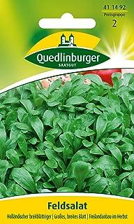 Feldsalat, Holländischer breitblättriger Quedlinburger Saatgut Samen 411492
