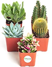 Shop Succulents | Assorted Collection of Live Succulent Plants, Hand Selected Variety Pack of Mini Succulents | | Collection of 5 in 2